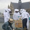 Les ruches sur le toit de La Poste du Louvre