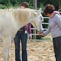 Le centre de formations Visions for Leaders propose des activités avec des chevaux pour améliorer ses compétences en leadership.