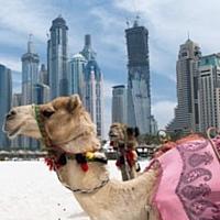 BravoSolution crée une filiale à Dubaï