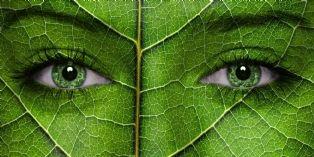 Une plante verte et vos collaborateurs travaillent mieux