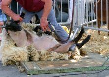 Patagonia interrompt ses relations avec un fournisseur accusé de cruauté envers les animaux