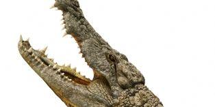 Des fournisseurs d'Hermès pointés du doigt pour l'abattage cruel de crocodiles