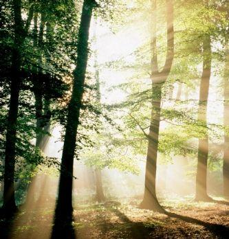Les 25 grandes entreprises françaises qui impactent la biodiversité