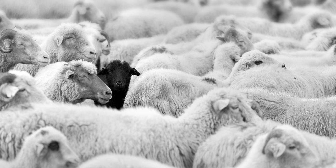 RGPD: le DPO, un mouton à 5 pattes?
