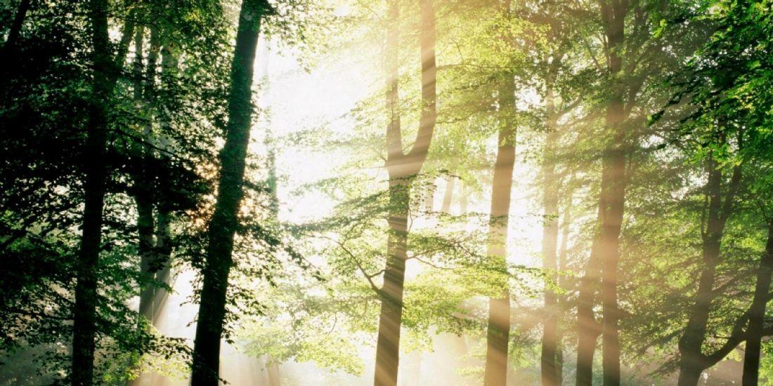 Achat public : le sourcing permet à l'acheteur de sortir du bois