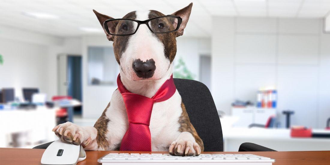 Emmener son chien au travail : une vrai source de bien-être?