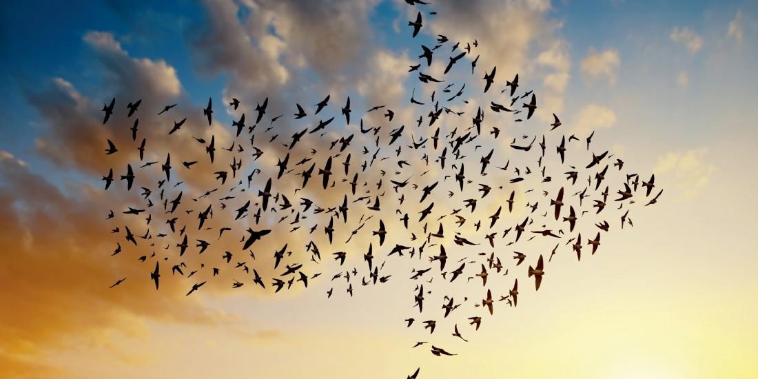 Cloud.... vers des migrations tous azimuts