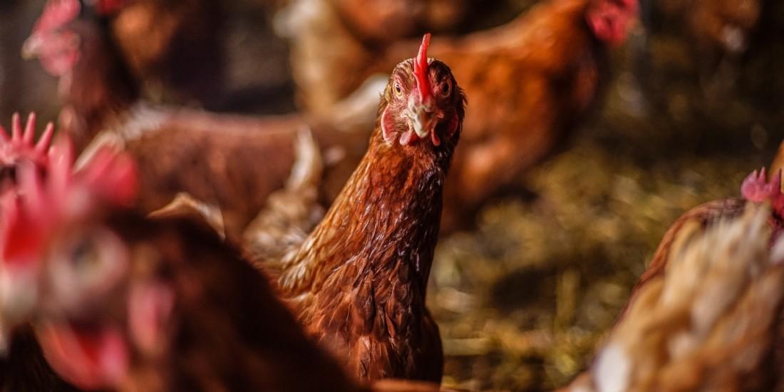 [Start-up sourcing] 'L'oeuf qui ne tue pas la poule' attaque le BtoB