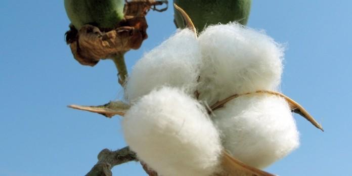 Levi Strauss & Co rejoint le U.S. Cotton Trust Protocol