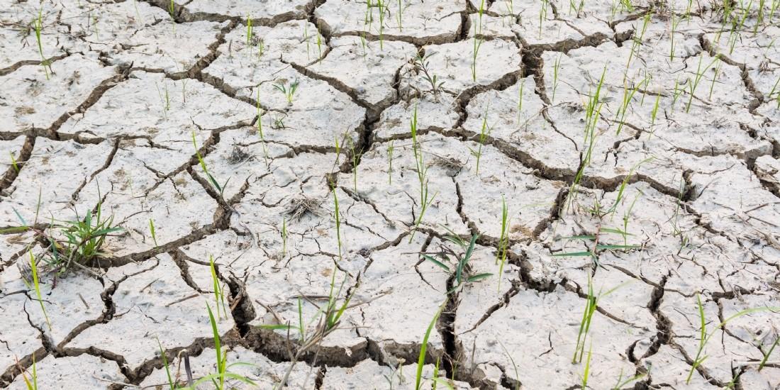 Changement climatique : mettre au point une agriculture durable pour réduire les risques
